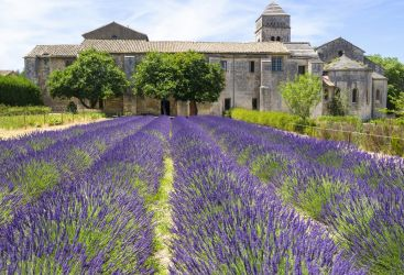 Slow Living in Provence